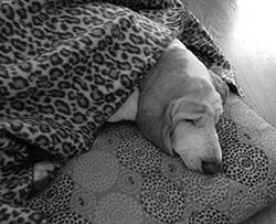 Everyone likes a warm blanket.