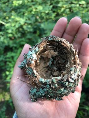 fallen birds nest