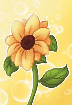 Sunflower-.jpg