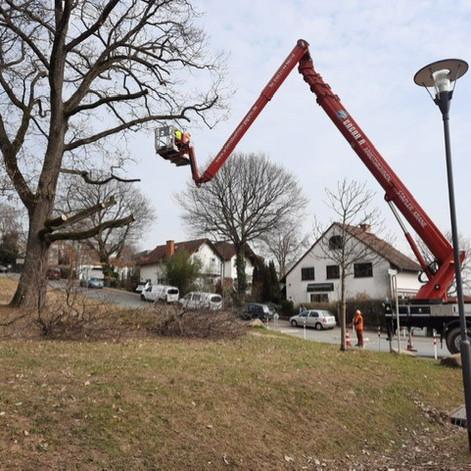 In den kommenden 3 Wochen wird der BSO an einigen Standorten im Stadtgebiet Bäume fällen.