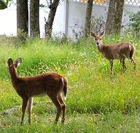 Hopatcong New Jersey Wildlife