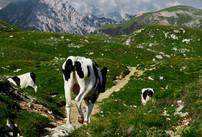 P1000707 - Col de Ra Sciores 1.jpg