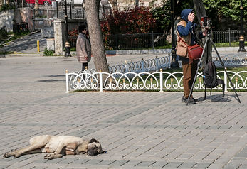 P1019606 - Istanbul 13.jpg