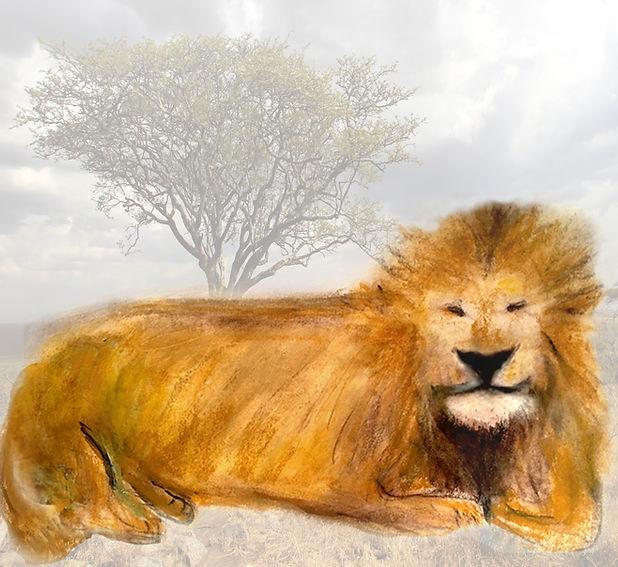 Lion in grasspsd.jpg