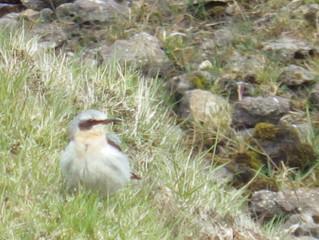 Beautiful Welsh Birds