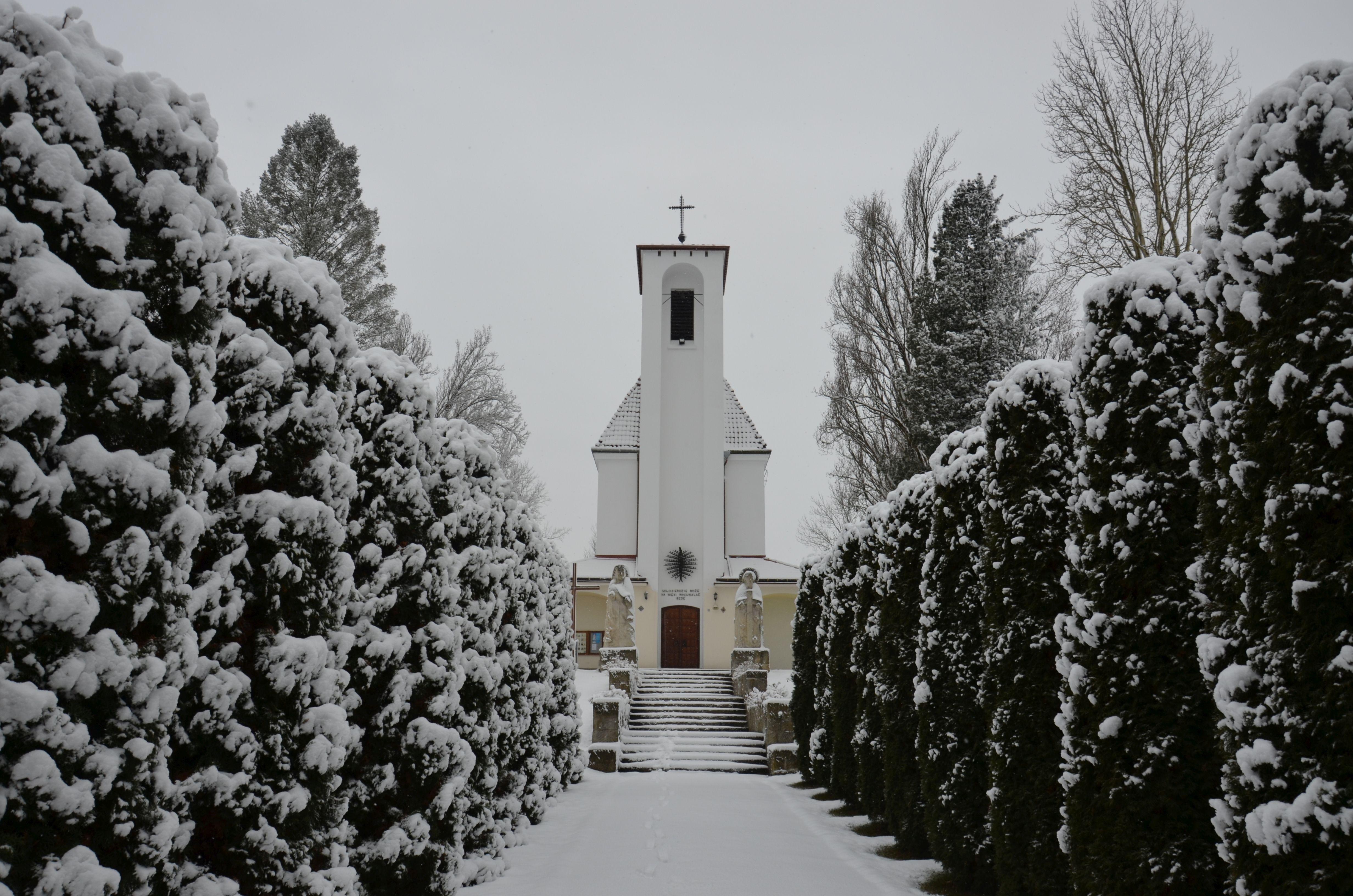 Alejka zimą