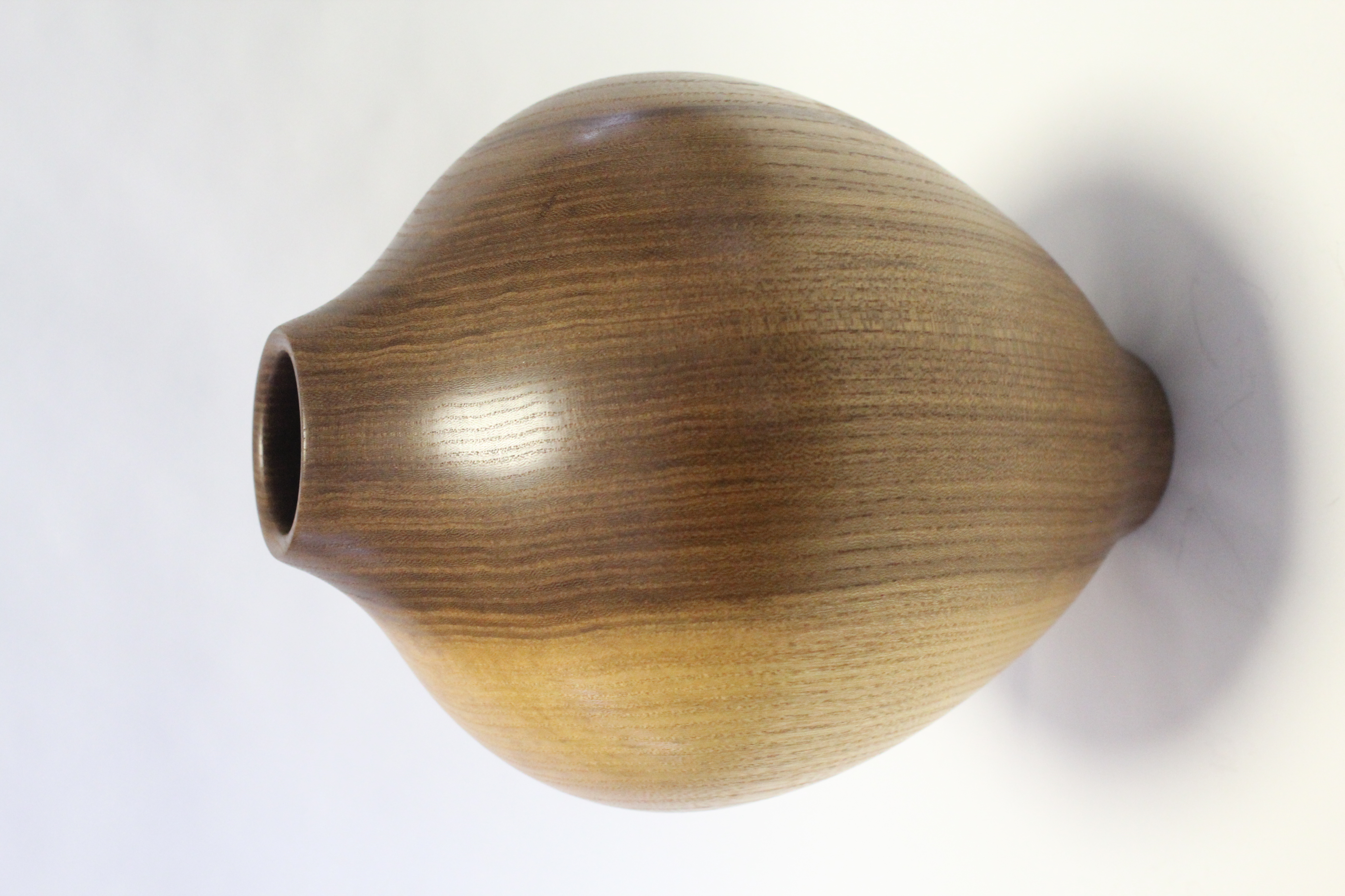 Elm hollowform