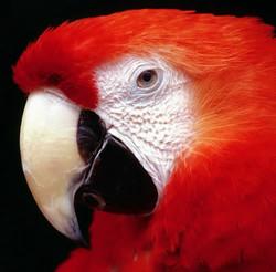 aves_010