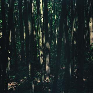 120mm Film