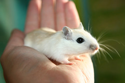mouse-2204321_1920