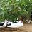 Thumbnail: Bio-Barbarie-Ente