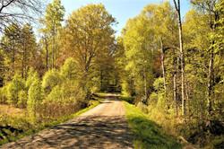 Waldweg2