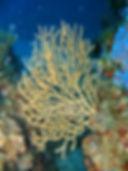 Explo - Club de plongée Bastiais
