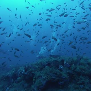 Exploration - Club de plongée Bastiais