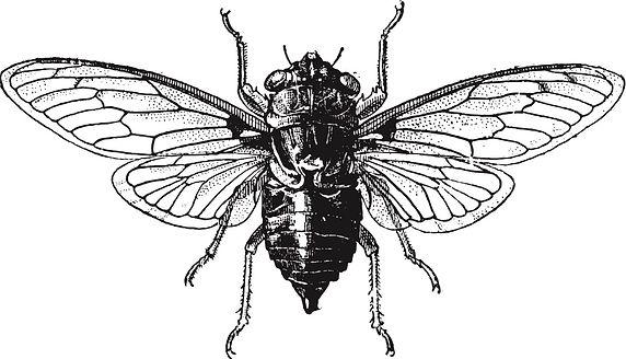 Cicada Image.jpg