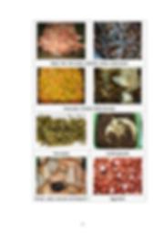 O-Park pratice_guide food waste definiti