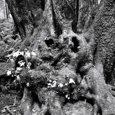 Little people tree.