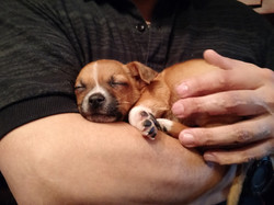 Miracle Dog Healing