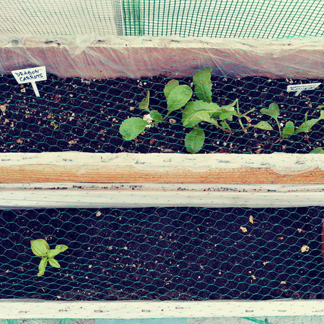 How to Protect Baby Vegetable Seedlings from Being Eaten in Small Greenhouse