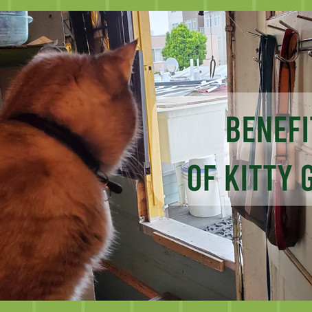 Benefits of Kitty Grass