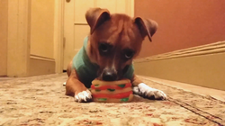 How to Destroy a Toy in One Minute