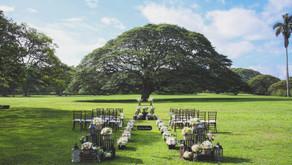 2017年 限定挙式会場 シンボルツリーの目の前での挙式が叶う「The Tree Wedding 2017」販売開始