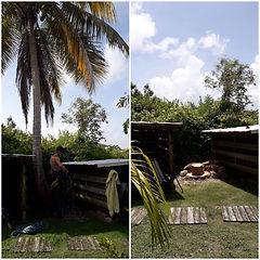 abattage d'un arbre par démontage gwada