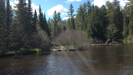 Chemical Pollution in the North Branch?