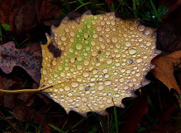 Forest Leaf-George Safranek.jpg