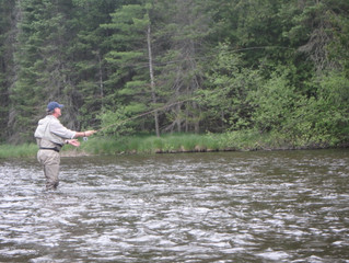 North Branch Sees a Drop in Trout Population