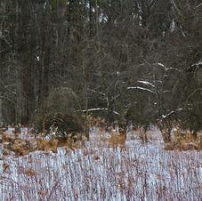Hidden Deer-George Safranek.jpg