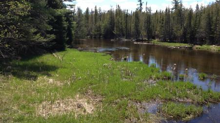 Trout Habitat Improvement Projects