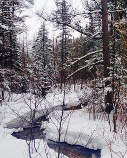 Harolds Trail Creek - Sara Haveman