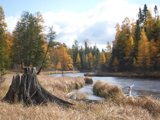 Fall on the North Branch - John Pacella