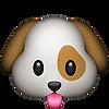 pets_cão_cachorro_dog_fasttele_gramado_c