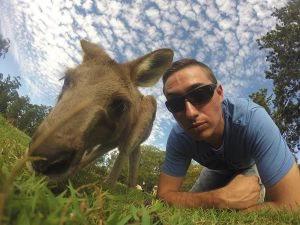 QLD kangaroo friend