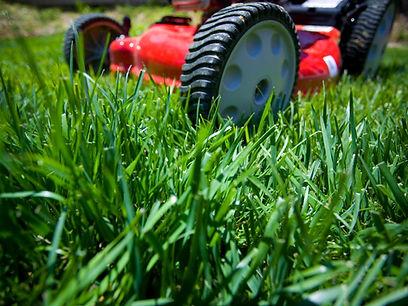 lawn.jpeg