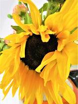 Sunflowers 5.jpg