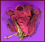 rose bud.jpg