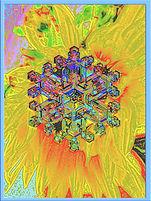 Winter sunflower  filtered 2.jpg