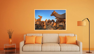 Camels in Abu Dhabi