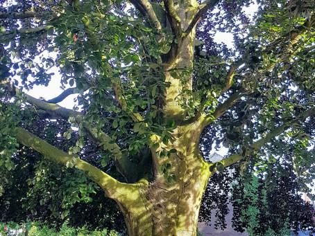 Mangeldenken und Loslassen  - Die Weisheit des Baumes