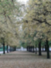 Blütenbaum.jpg