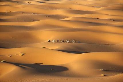 Cameltrecksahara.jpg