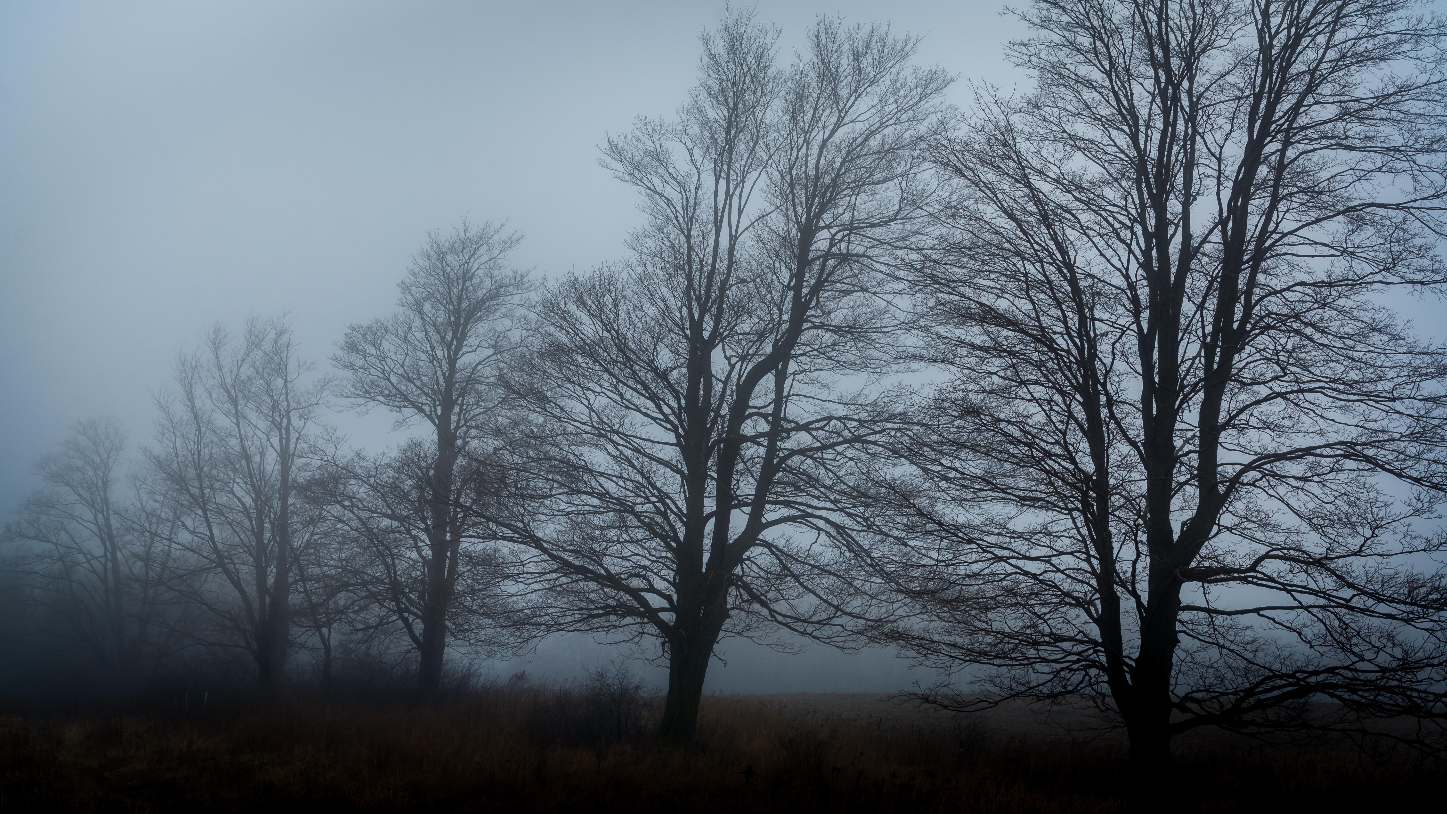 [mist wood]