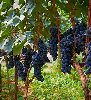 Familia Campovilla vinhos artesanais, av