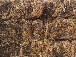 Long Needle Pine Straw