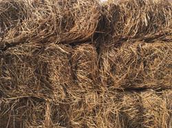 Long Needle Pine Straw