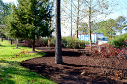 Walnut Colored Mulch