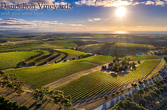 Dandelion Vineyards.PNG